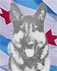 Police Canine   Max II | Star #DNA